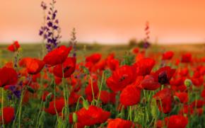 flowers_02.jpg